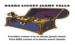 logo darah liguey diamou yallah_Plan de travail 1 - Copie